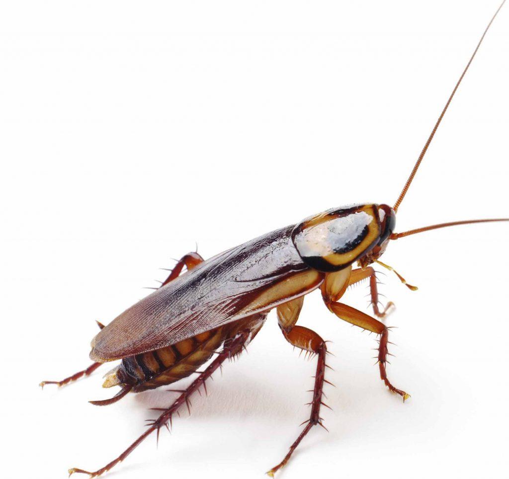 Uno scarafaggio